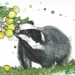 badger apples