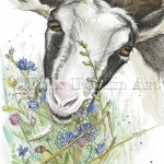 meadow goat